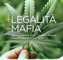 """Elezioni: +Europa:<br> """"Su cannabis terapeutica<br>  continuano chiusure proibizioniste"""""""